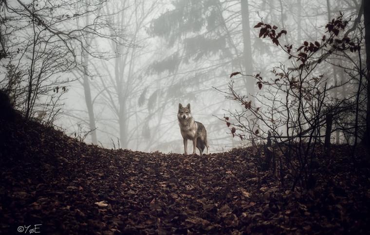 """Najkrajšou fotografiou z územia MAS je """"Vlk"""""""