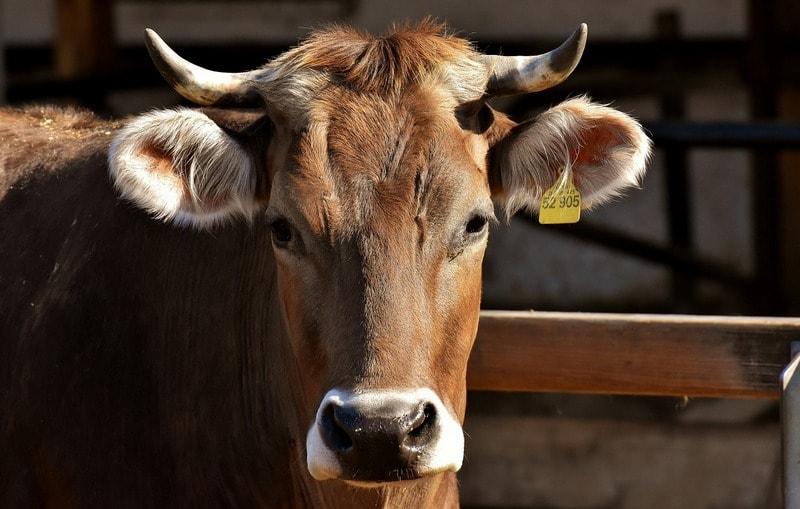 4.1 PRV: Podporíme investície našich farmárov